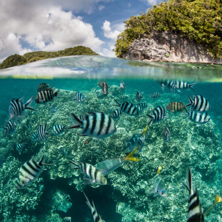 Joli spot de plongée sous l'eau où nagent des poissons