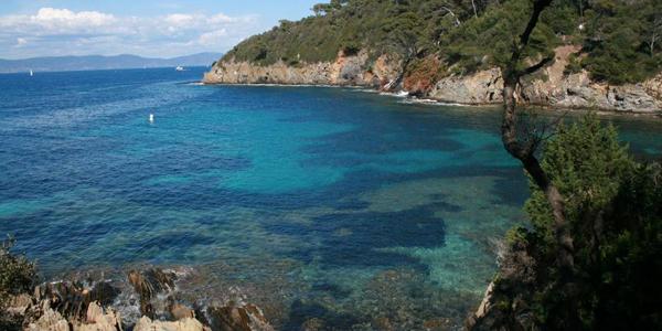 Réserve de Banyuls, l'un des meilleurs spots de plongée en Méditerranée !