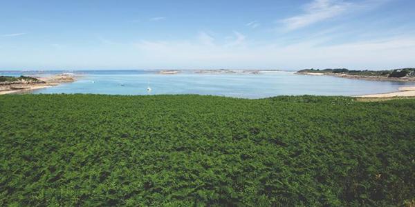 La végétation de la plage de Goas Treiz