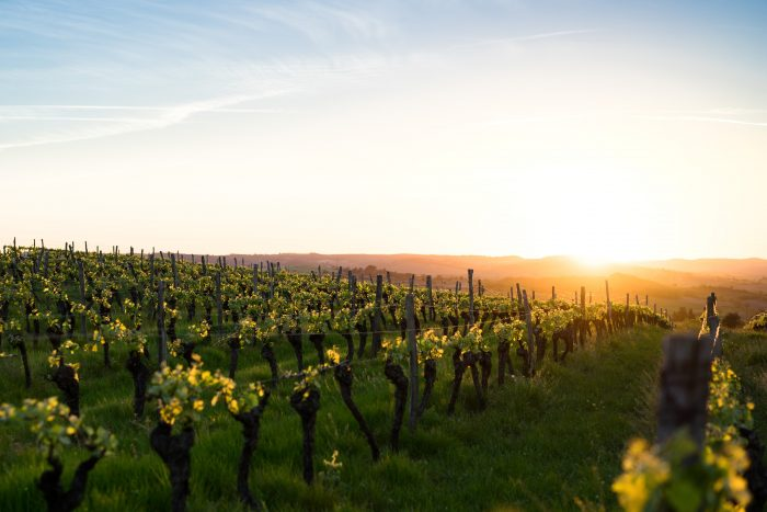 Les vignobles du Canal du Midi