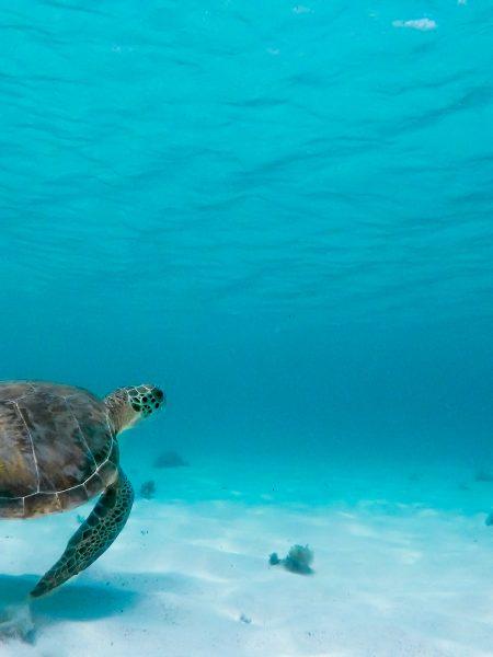 Tortue de mer - être un marin éco-responsable